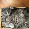Kochamy koty w internetach