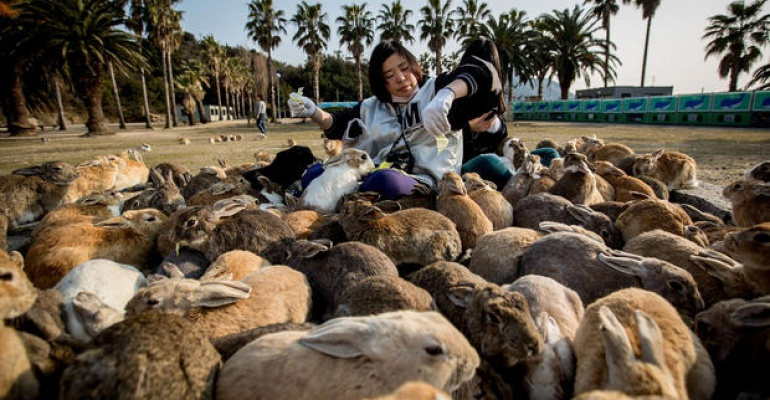 Gdzie po Świętach wypoczywa królik wielkanocny? W Japonii.