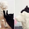 Twojego kota często atakują psy? Kup mu zabawkę, która zapewni słodką zemstę.