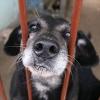 Chcesz pomóc psiakom, a nie wiesz jak?