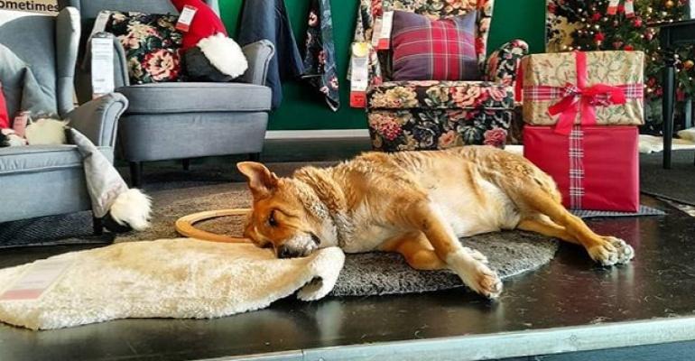 Bezdomne psy zamieszkały w Ikea