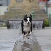 Gdzie pójść na spacer z psem?