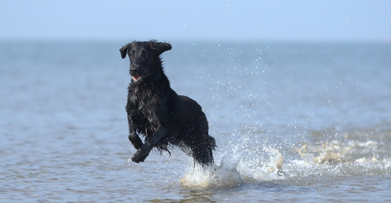 Gdzie na plażę z psem - lista