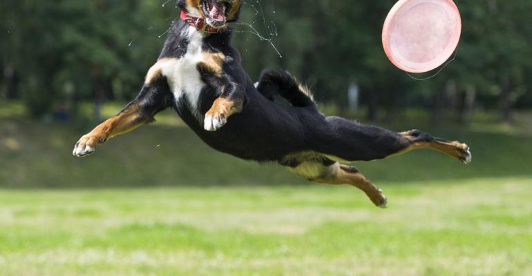 Porady weterynarzy i psie akrobacje w weekend