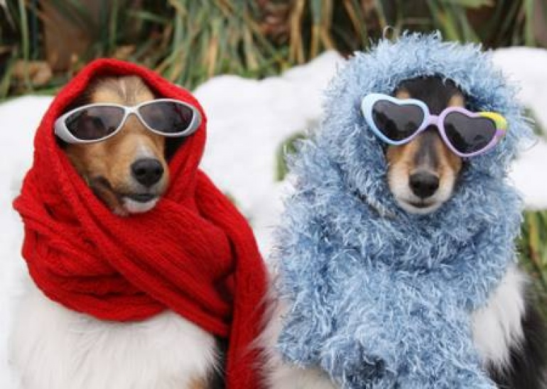 Festiwal Smaków i Akcesoriów dla psów