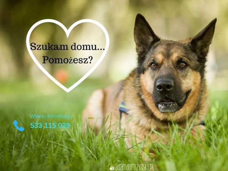 Nero - wyjątkowy pies, szuka wyjątkowego człowieka!