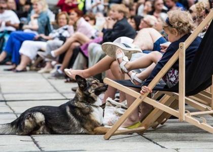 Reksio w trampkach na Placu - Pokaz plenerowy z psami